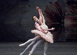 Image of The Australian Ballet