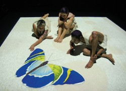 Image of Insite Arts, Compagnia TPO and Performing Lines for Blak Lines